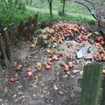 Čo do kompostu
